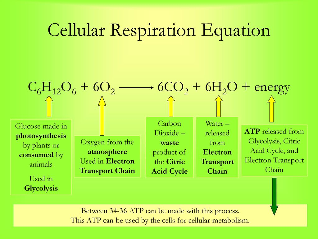 celluar metabolism Metabolism breaks down large molecules like food into usable energy this energy drives bodily processes critical to survival in this video.
