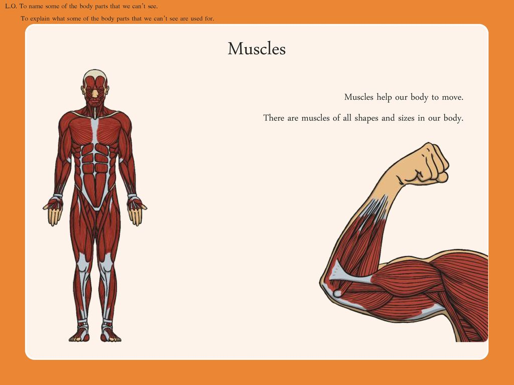 Parts Of The Human Body Lesson 1 Ppt Download