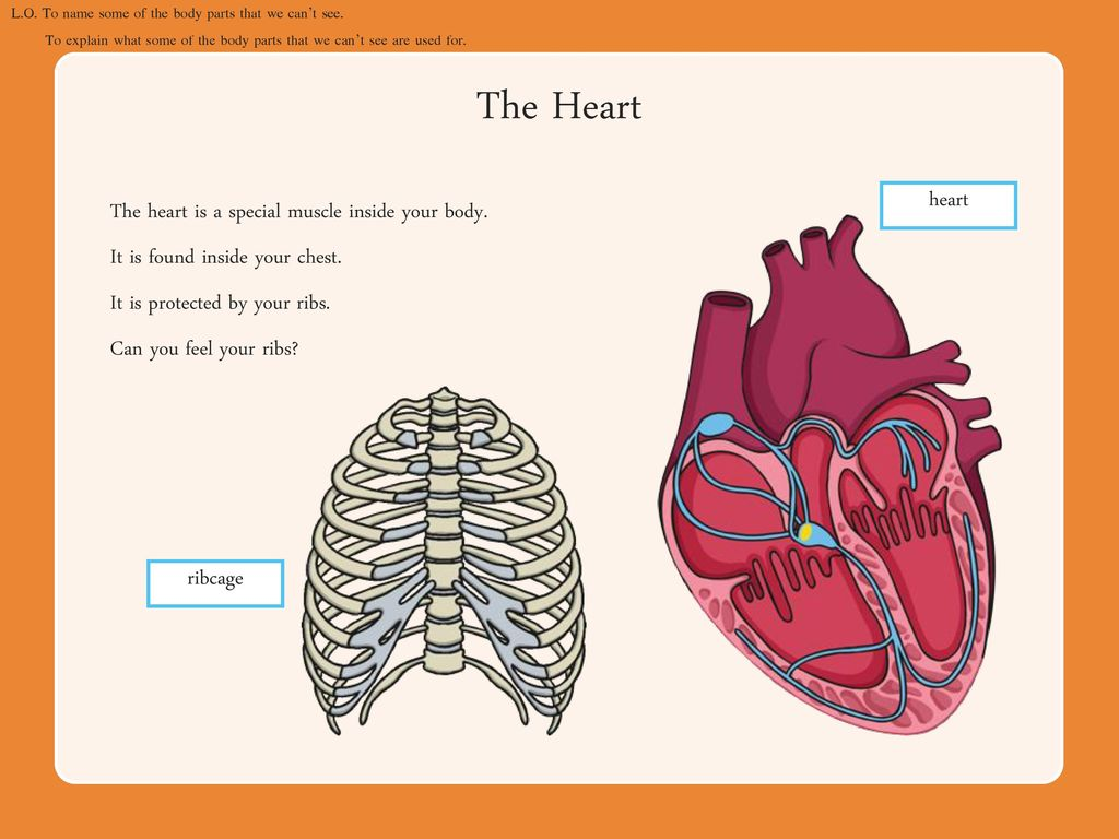 Parts of the Human Body Lesson 1 - ppt download
