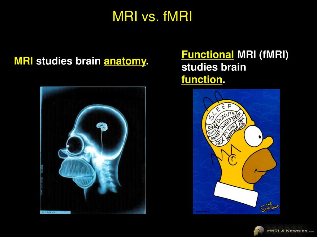 Jody Culham Brain and Mind Institute Department of Psychology - ppt ...