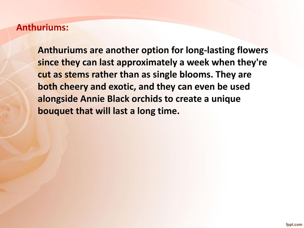 4048bce9e9c Long Lasting Flower Varieties - ppt download