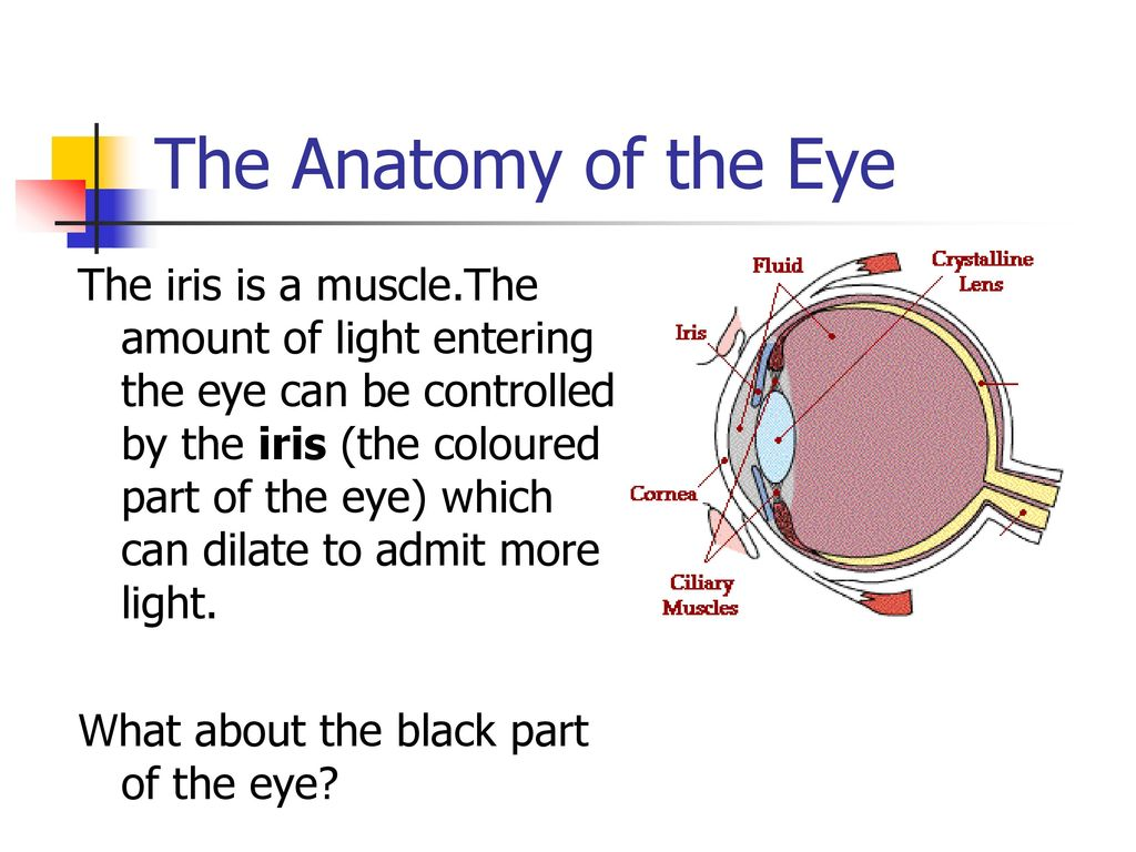 The Eye Snc2d Ppt Download
