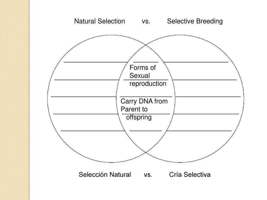 venn diagram natural and artificial selection venn diagram natural selection and selective breeding install venn diagram natural selection selective breeding