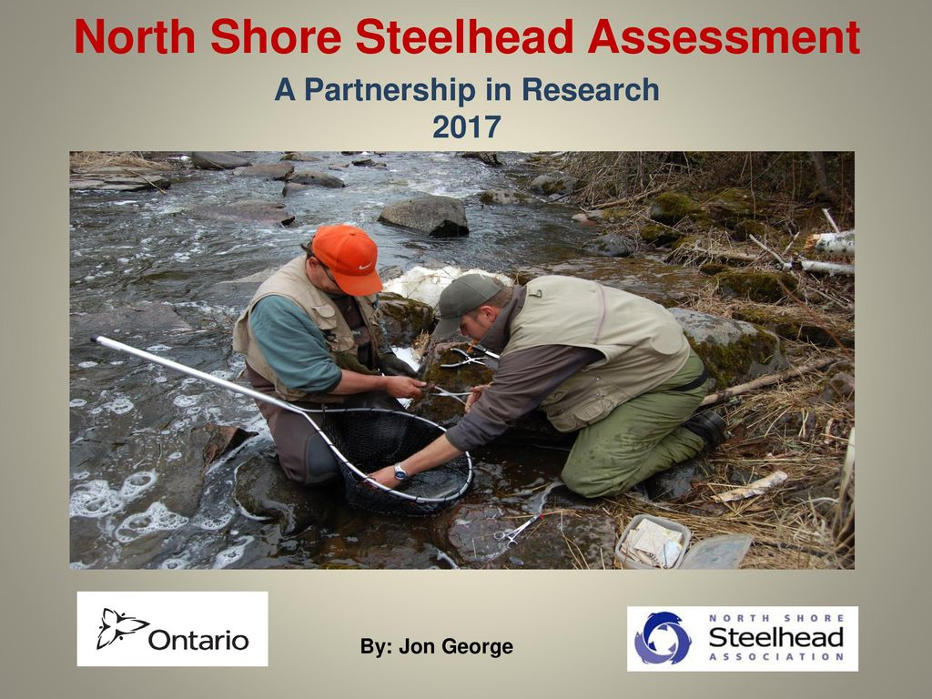 North Shore Steelhead Assessment A Partnership in Research