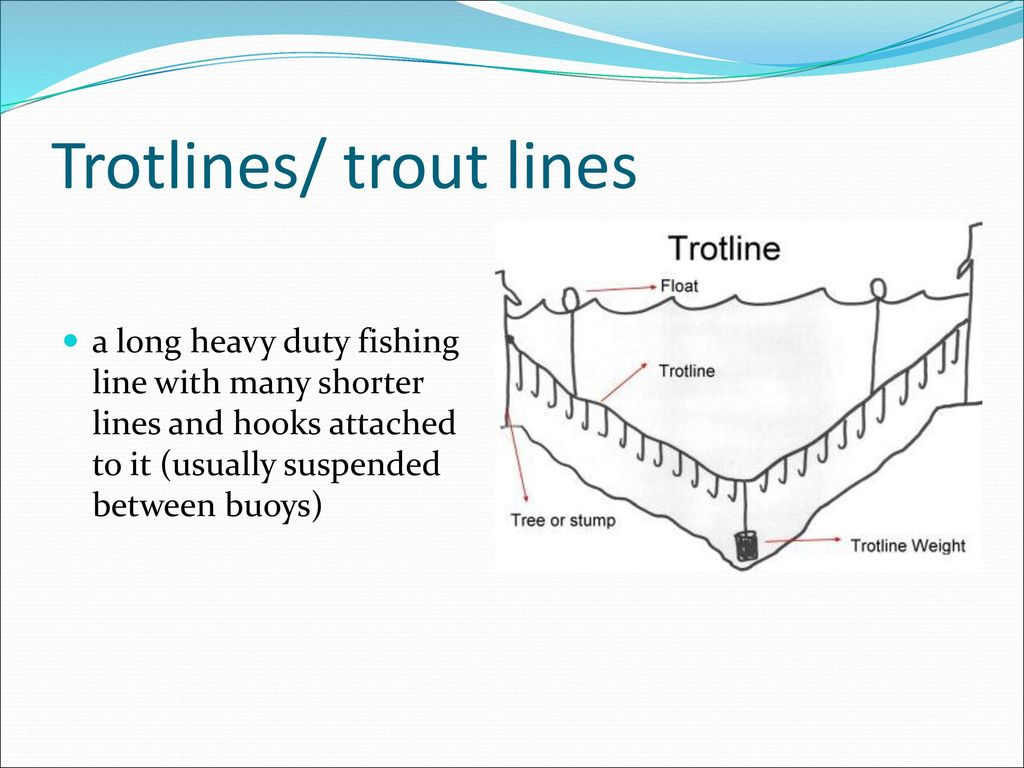 Catfish Bait And Catfishing Techniques Ppt Download