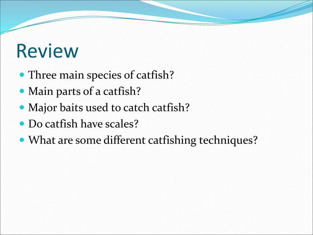 Catfish, Bait, and Catfishing Techniques - ppt download