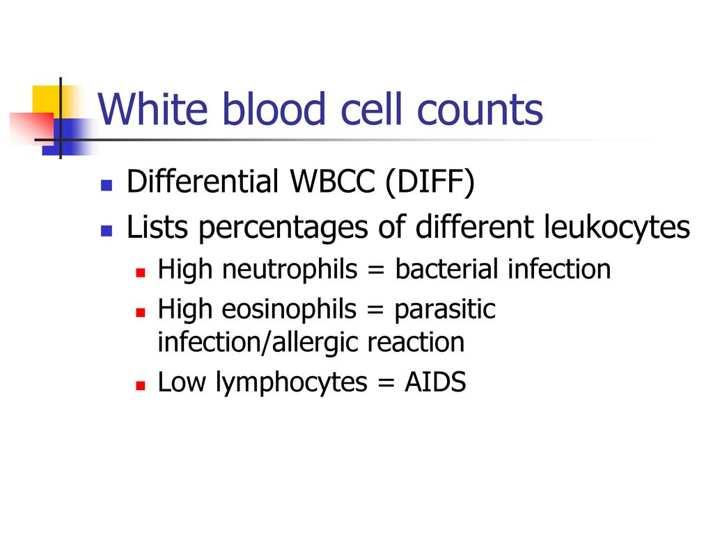 Warm-Up What are the 4 major components of blood? - ppt download