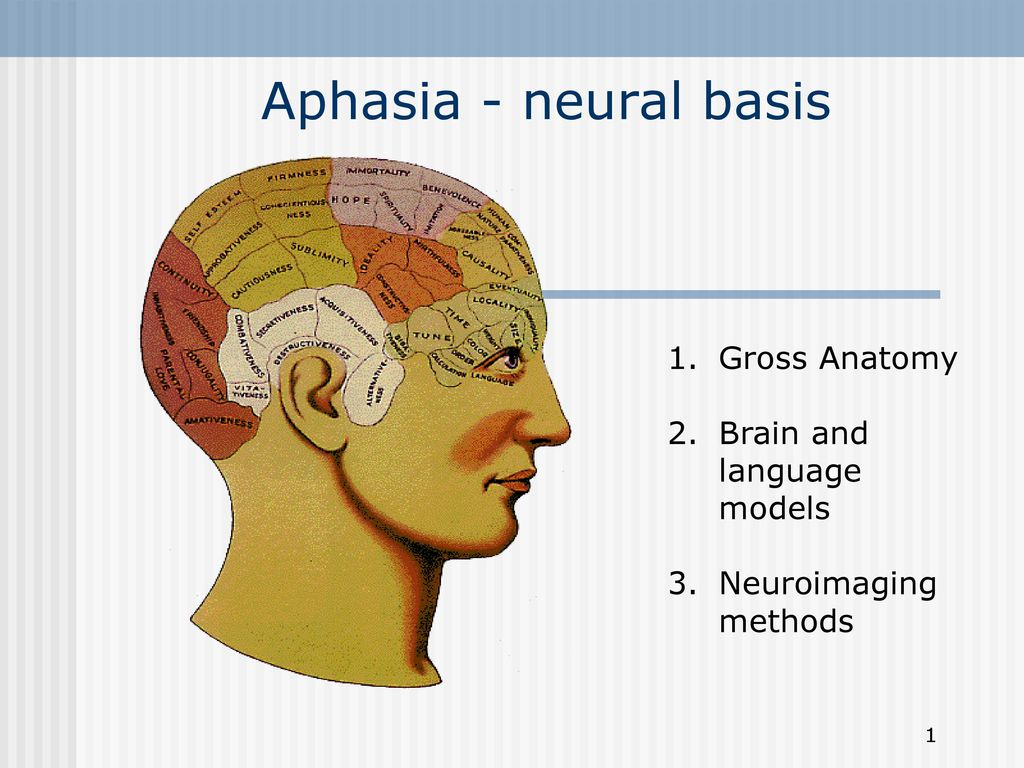 Aphasia - neural basis Gross Anatomy Brain and language models - ppt ...