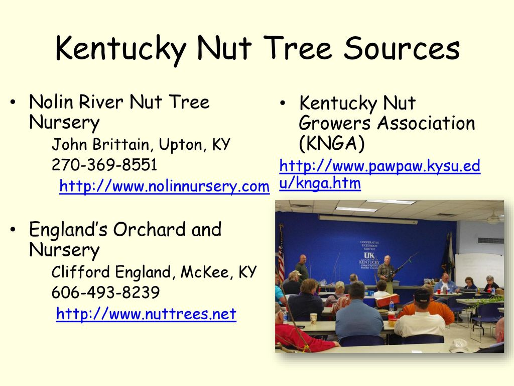 Kentucky Nut Tree Sources