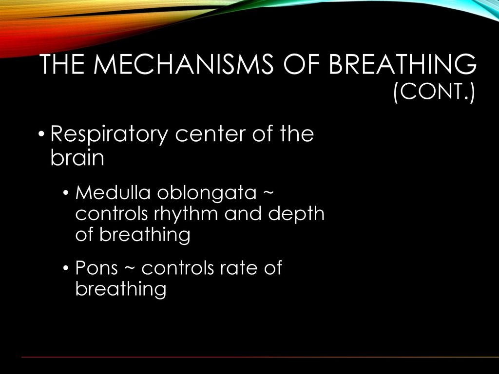 what controls the rate of breathing