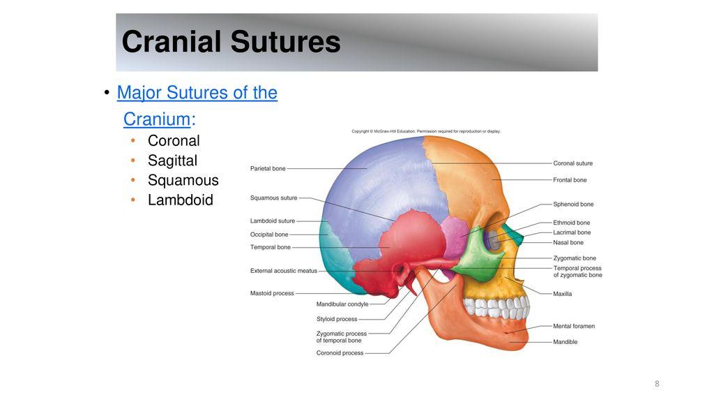 cranial sutures major sutures of the cranium: coronal sagittal