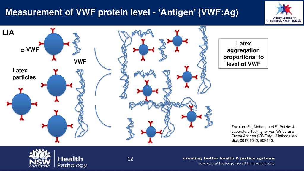 Laboratory Testing For Von Willebrand Disease Ppt Download