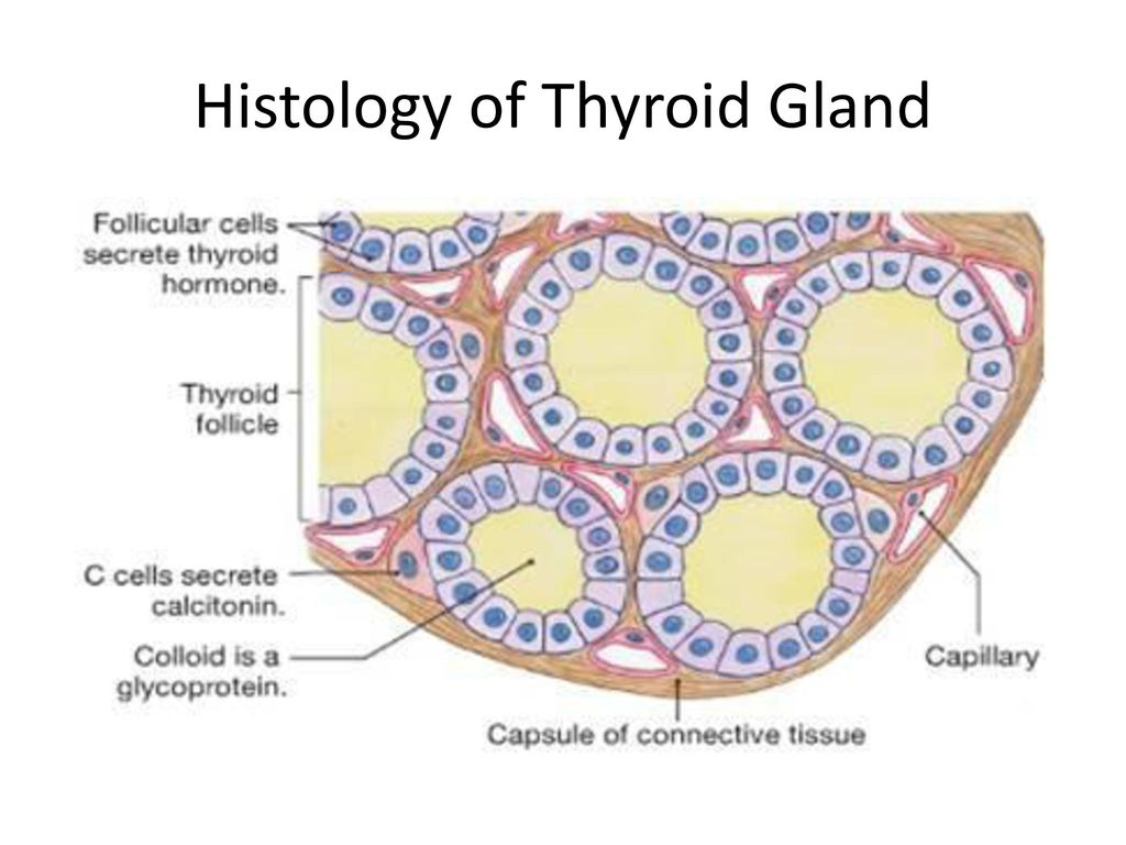 Thyroid Examination Ppt Download