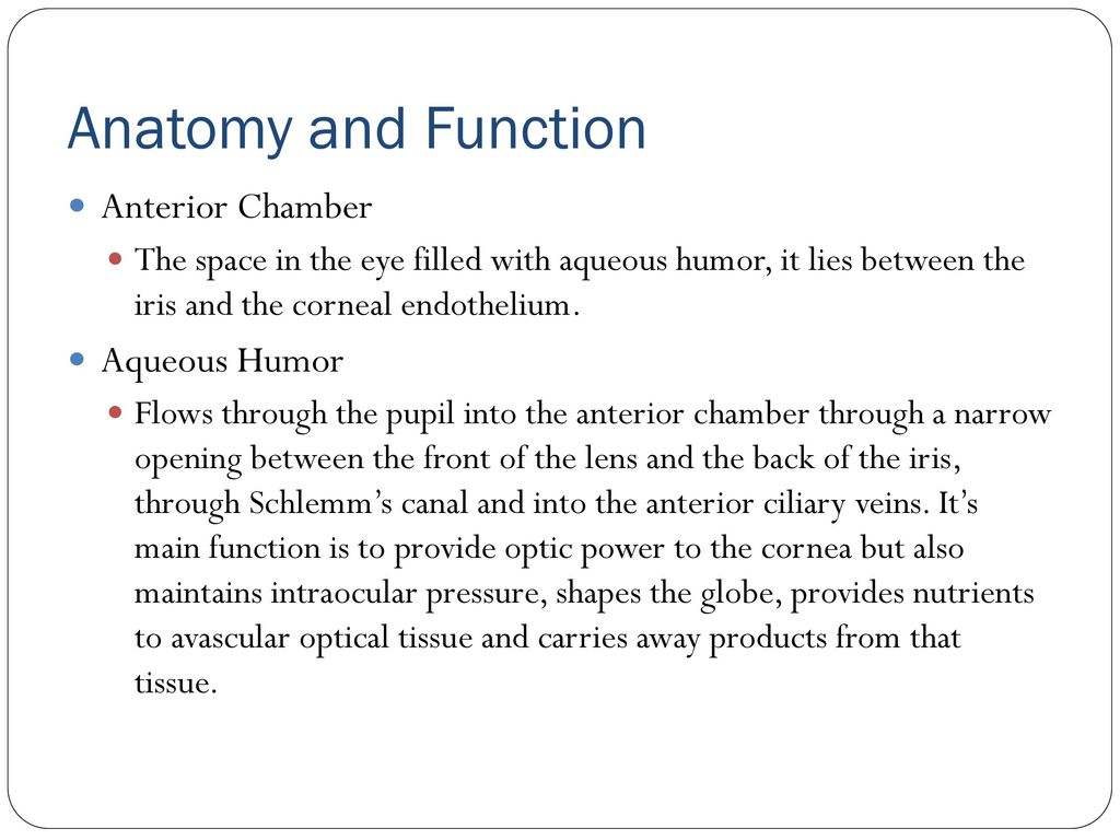 Anatomy for ICD-10 The Eye and Ocular Adnexa - ppt download