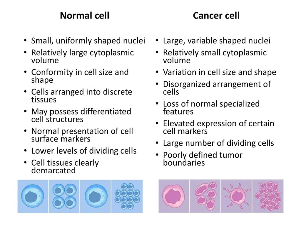 Cancer cells vs normal cells