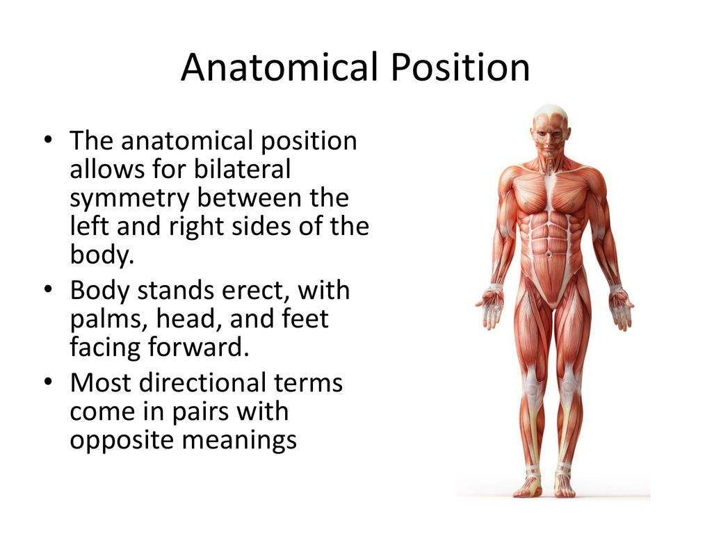 HB1: Analyze the anatomy and physiology of a healthy human - ppt ...