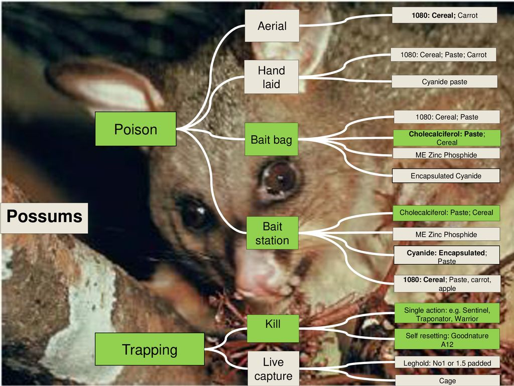 Best Practice Guidance for Predator Control - ppt download