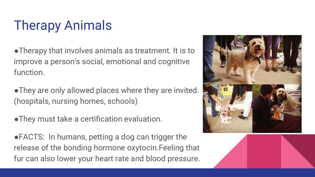 Animal Therapy Club 1st Meeting 13 September Ppt Download