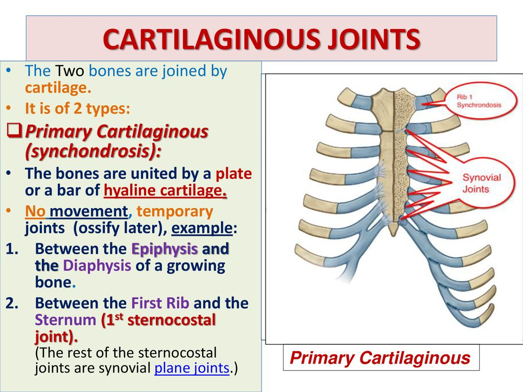 Joints By Dr Sanaa Alshaarawy Ppt Download The rest of the sternocostal. joints by dr sanaa alshaarawy ppt