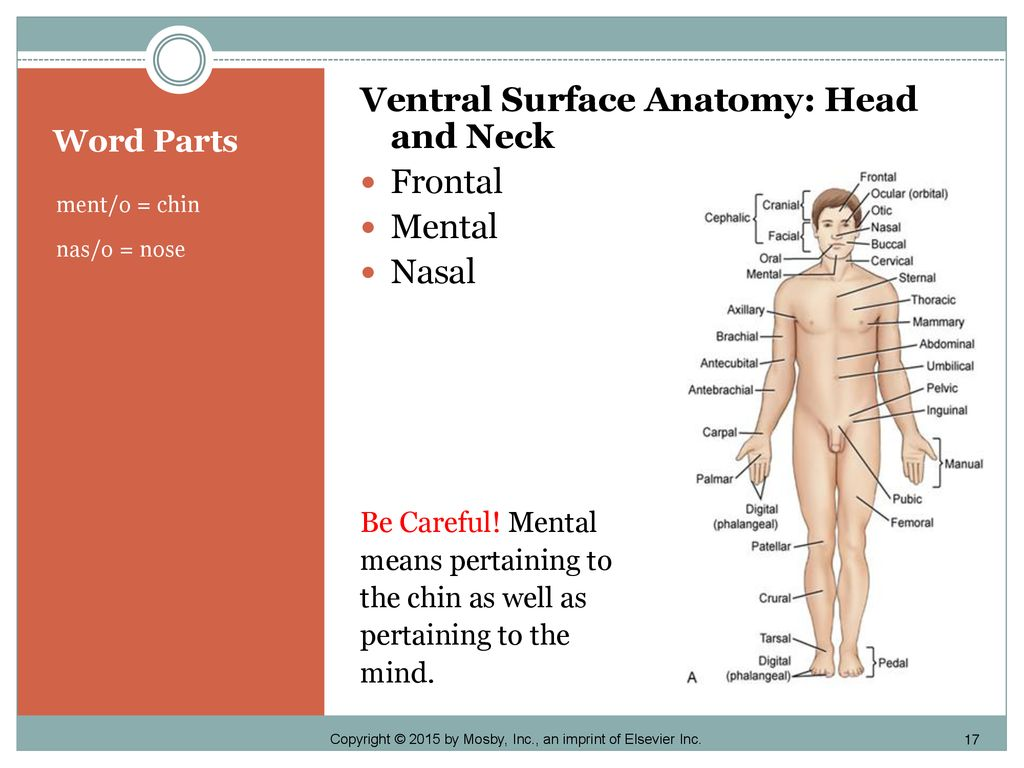 BODY STRUCTURE AND DIRECTIONAL TERMINOLOGY - ppt download
