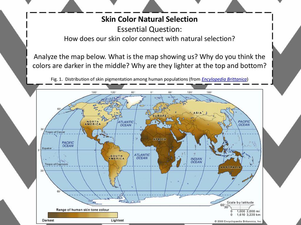 Skin Color Natural Selection Ppt Download