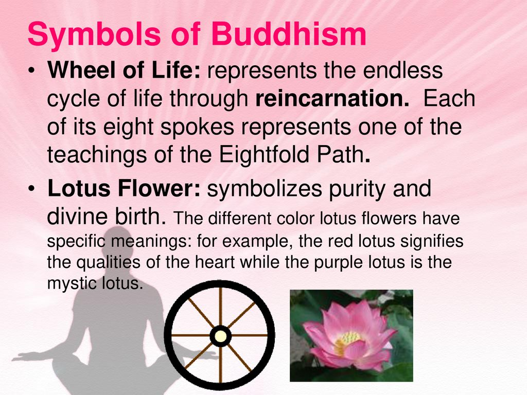 Lotus Flower Meaning In Buddhism Flowers Healthy