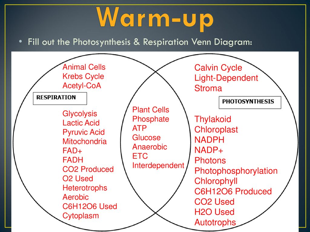 Warm up quiz notes on respiration ppt download warm up fill out the photosynthesis respiration venn diagram ccuart Image collections