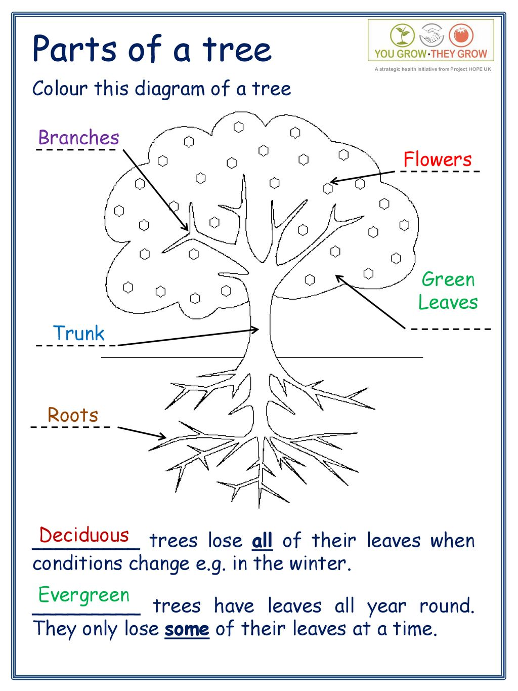 parts of a tree trunk diagram | world of reference tree trunk branch diagram #8