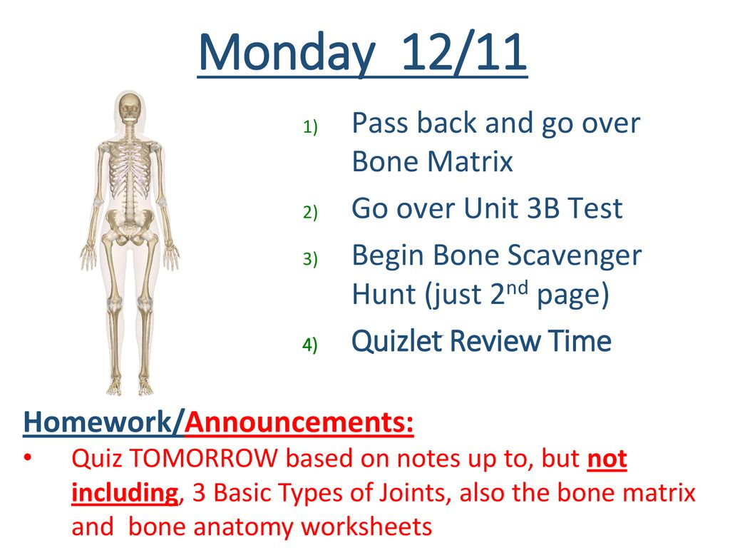 Tuesday 1/2 Review – Muscle Diagram Practice #2 Finish Notes - ppt ...