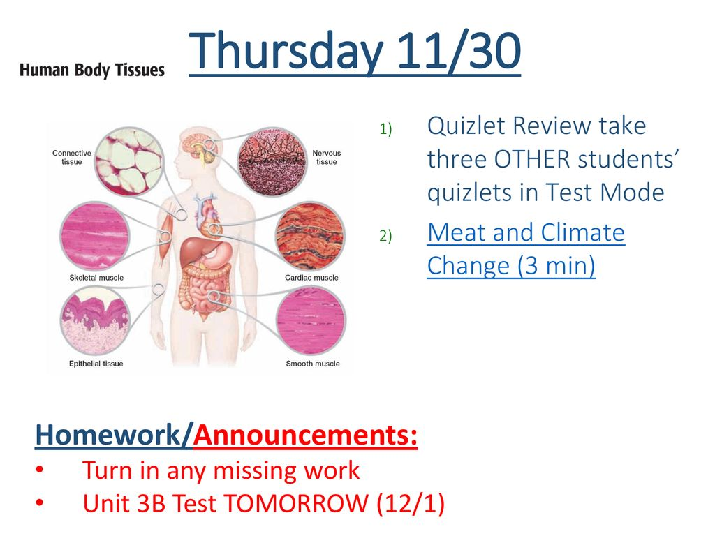 Tuesday 1/2 Review – Muscle Diagram Practice #2 Finish Notes
