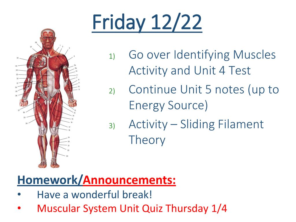 Tuesday 12 Review Muscle Diagram Practice 2 Finish Notes Ppt