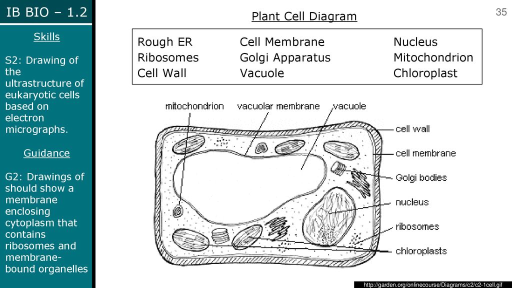 Slide Plant Cell Diagram 1 Plant Cell Diagram 2 Plant Cell