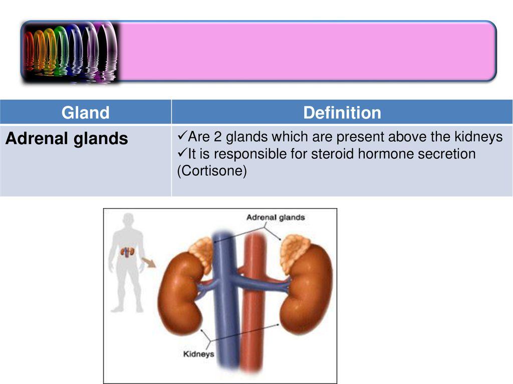 endocrine system medical terminology. - ppt download