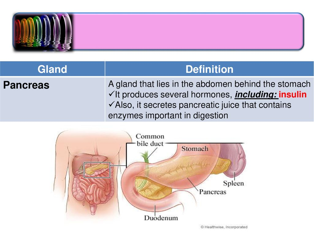 endocrine system medical terminology. - ppt download