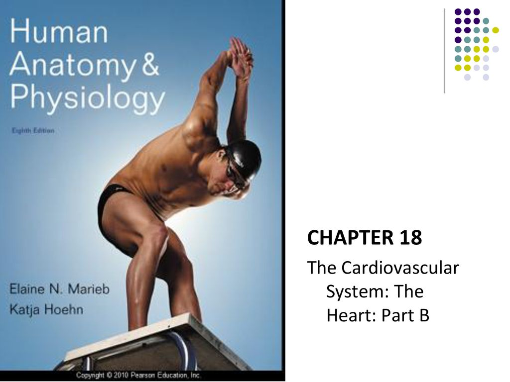 CHAPTER 18 The Cardiovascular System: The Heart: Part B. - ppt download