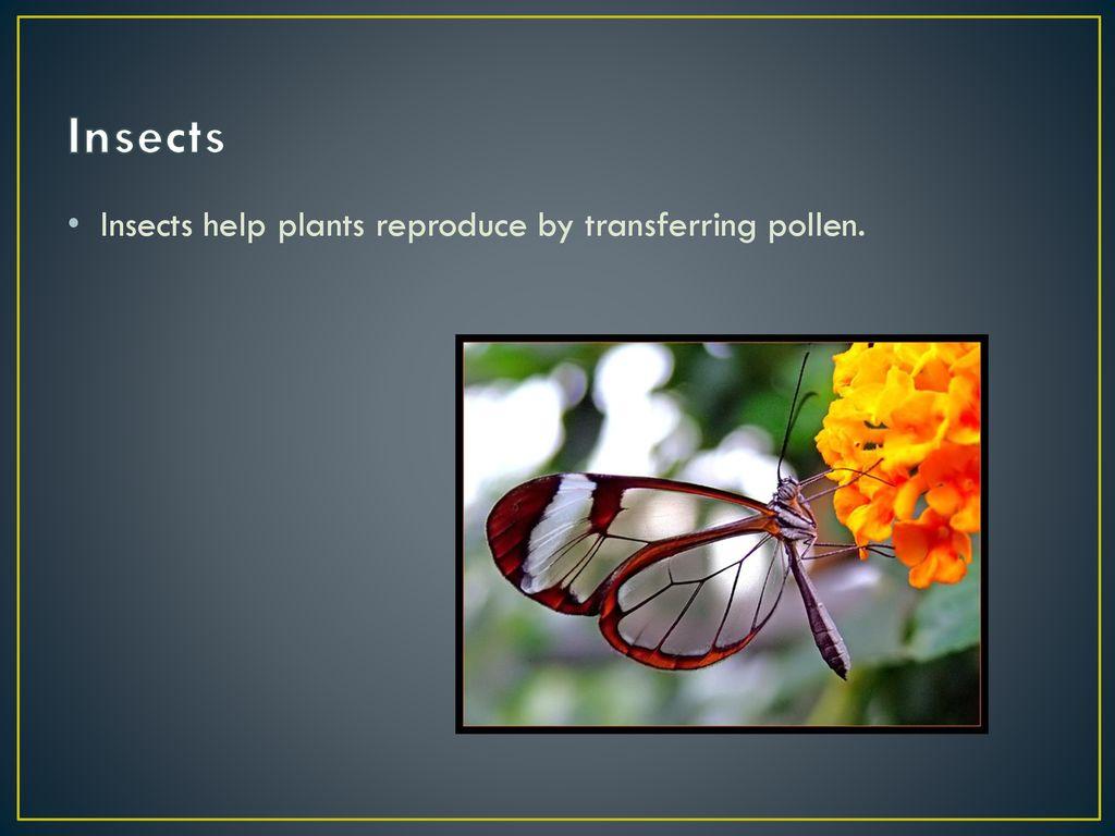 Plants November 9 & ppt download