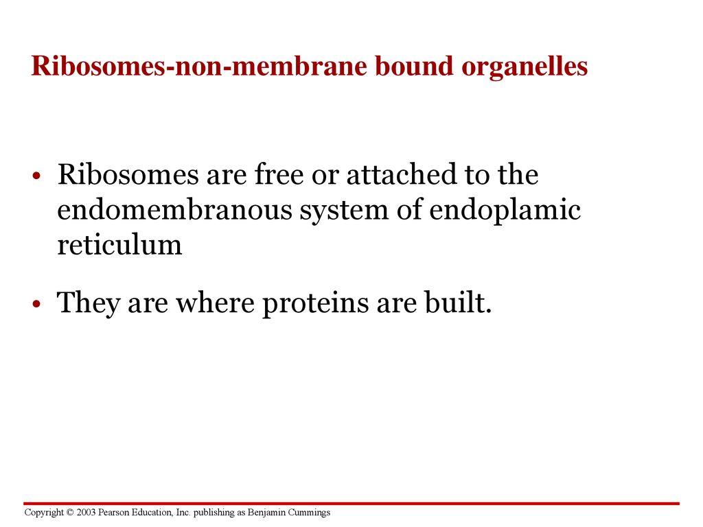 non membrane organelles
