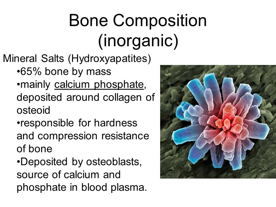 Bone Composition (inorganic)