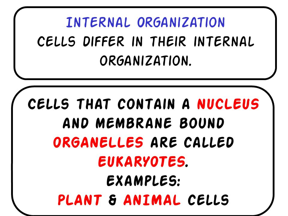 Internal Organization Cells differ in their internal organization.