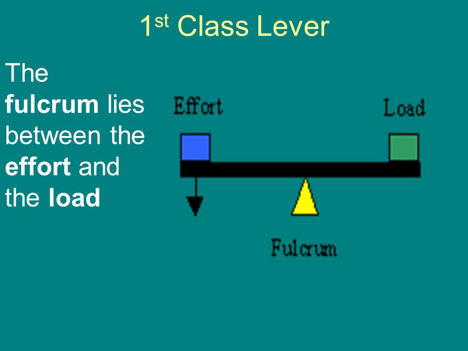 1st Class Lever The fulcrum lies between the effort and the load