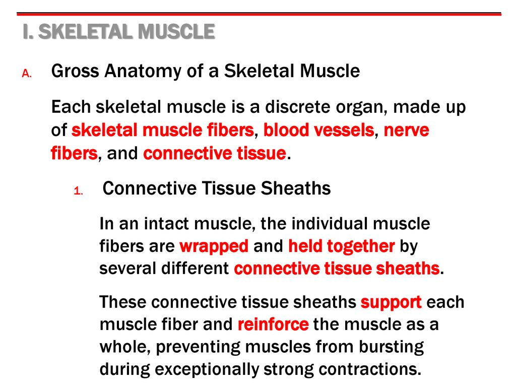 9 MUSCLES & MUSCLE TISSUE. - ppt download