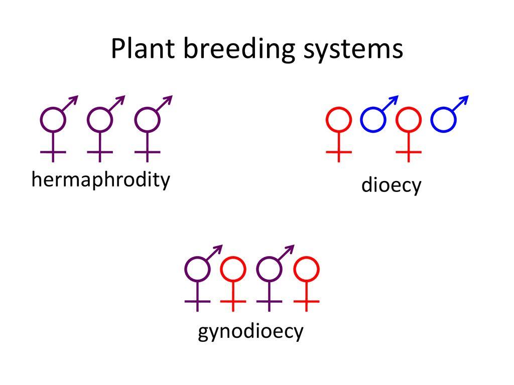2 Plant Breeding Systems Hermaphrodity Dioecy Gynodioecy