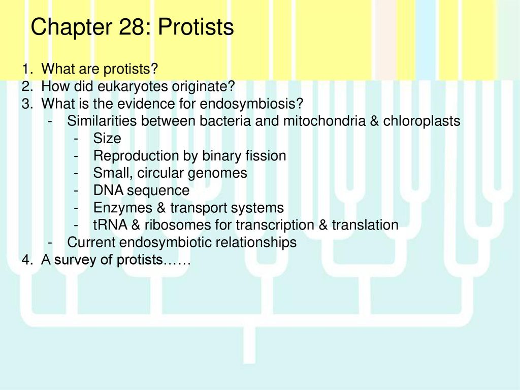What Are Protists Topsimages