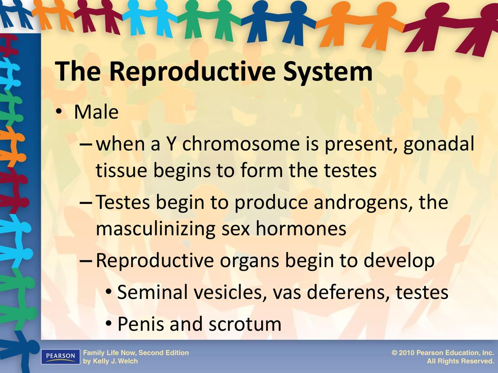 Masculinization of sexuality and reproduction