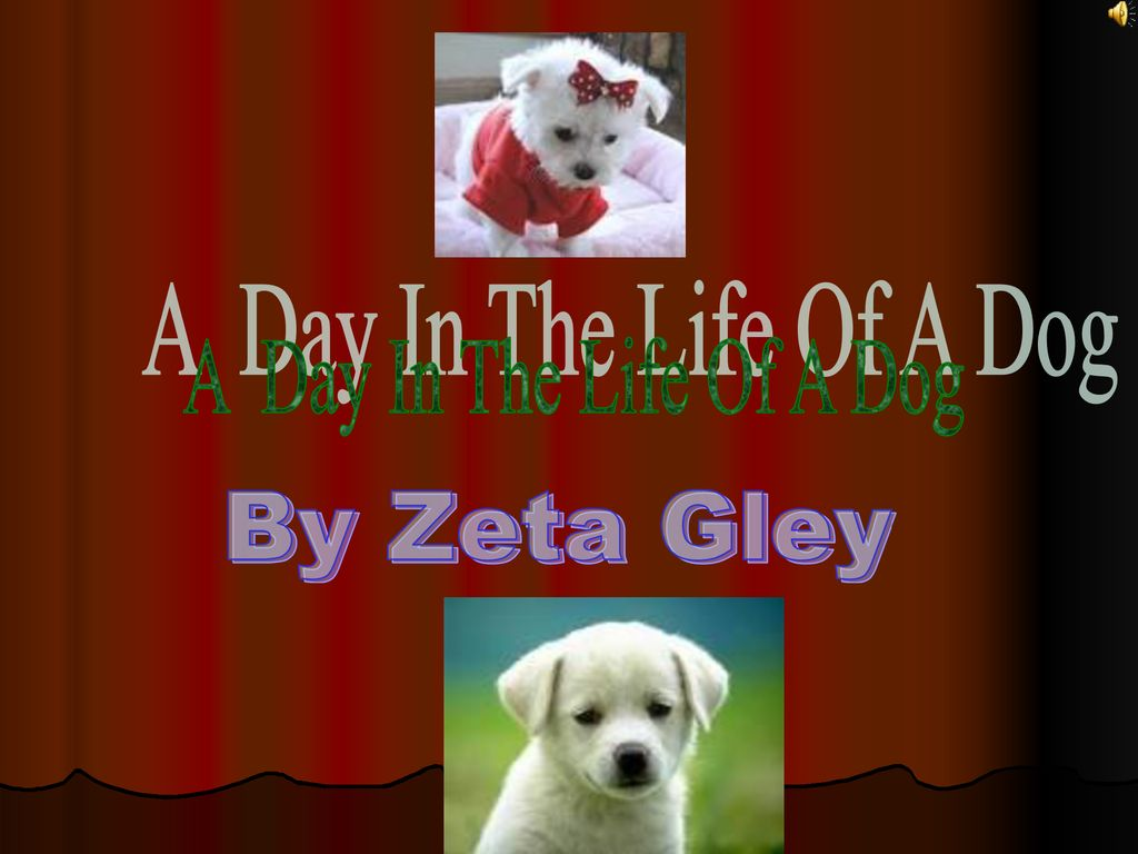A Day In The Life Of A Dog By Zeta Gley  - ppt download