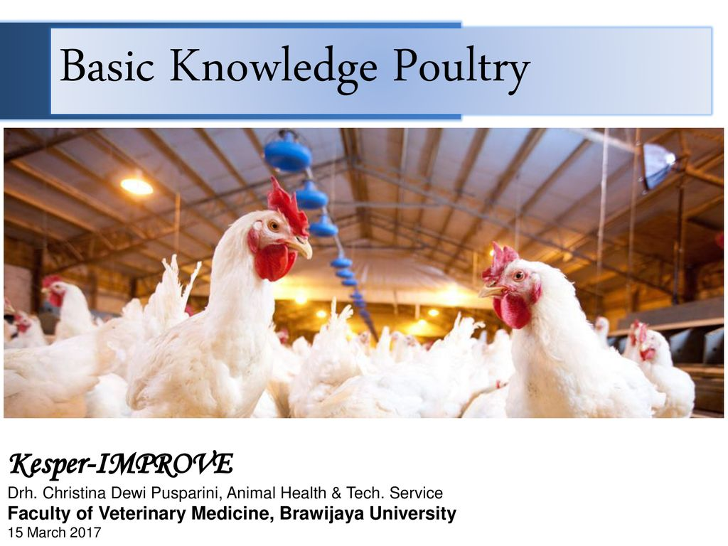 Basic Knowledge Poultry - ppt download