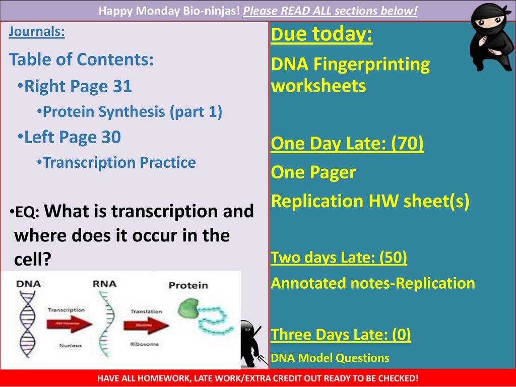 Dna Fingerprinting Worksheets Ppt Download
