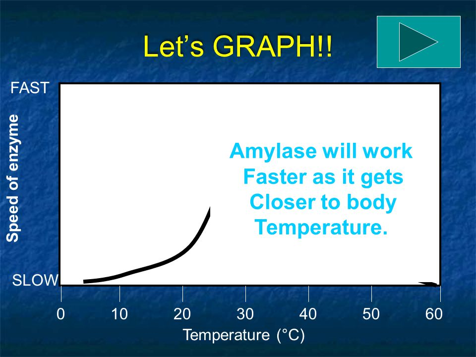 Let's GRAPH!! Amylase will work Faster as it gets Closer to body