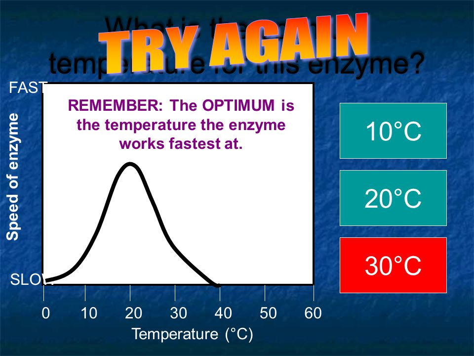 What is the optimum temperature for this enzyme