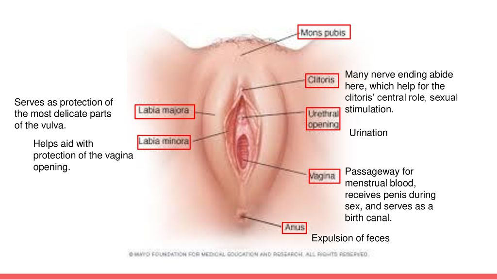 Many nerve ending abide here, which help for the clitoris' central role,  sexual